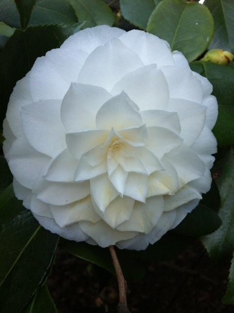 beautiful-delicate-flower